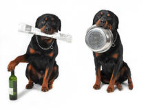 Dogs with objects Royalty Free Stock Photo