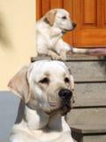 Dogs On The Door Stock Photo