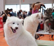 Dogs and  owners at exhibition Stock Image