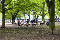 Dogs and owners Royalty Free Stock Photo