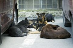 dogs pack stray Arkivfoton