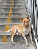 dogs pack stray Στοκ Εικόνες