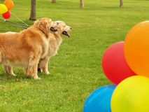 Dogs in park Royalty Free Stock Photography