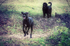 Dogs in park Stock Photography