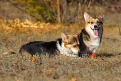 Dogs in park Stock Images