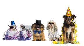 Dogs partying Royalty Free Stock Images