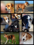 Dogs patchwork. Several photos of diverse dogs, showing how wonderful they are Royalty Free Stock Photo