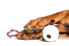 Dogs paw with ball Stock Photos