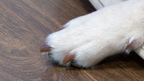 Dogs paw Royalty Free Stock Photography
