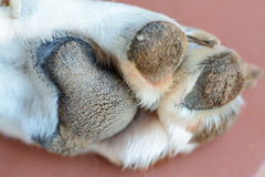 Dogs paw Stock Image