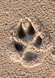 Dogs paw print. In the beach sand Stock Photos