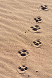 Dogs paw-prints Royalty Free Stock Photography