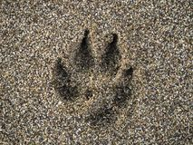 Dogs paw mark on wet sand at the beach. Dogs paw trace on wet sand at the beach stock image
