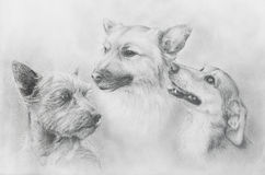 Dogs pencil drawing on old paper, Dogs portrait. Dog portrait. Stock Photo