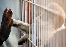 Dogs people connection adoption. Human hand is touching a cute little doggie paw through a fence of a adoption centre Stock Photo