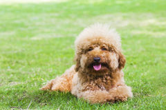 Dogs, pets. Pet dog on the grass royalty free stock image