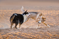 Dogs play fun Royalty Free Stock Photos