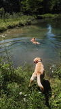 Dogs playin in lake Stock Images