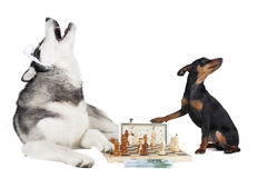 Dogs playing chess Stock Images