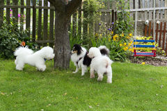 Dogs playing in the garden. Dog friends playing in the garden Royalty Free Stock Photography