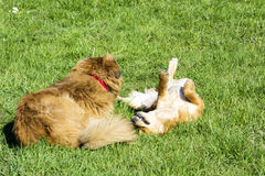 Dogs playing in the park Royalty Free Stock Images