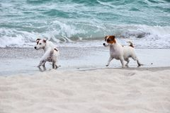 Dog beach. royalty free stock image