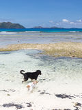 Dogs playing in the sea Royalty Free Stock Image