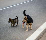 Dogs playing on street Royalty Free Stock Photo