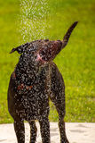 Dogs playing in a wet park Royalty Free Stock Photo