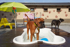 Dogs pool Stock Photo