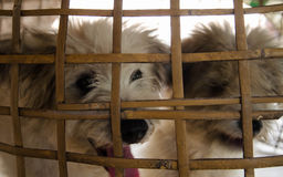 Poor puppies were taken in a wooden cage. Stock Photos