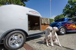 Dogs pose in front of hot-rods at classic car show. Two dogs pose in front of an animal carrier during Northwest Deuce Days in the provincial capital Stock Images