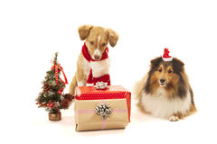 Dogs with presents Royalty Free Stock Photo