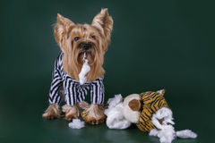 Dogs in prison for murder toys Stock Image