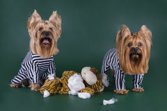 Dogs in prison for murder toys Royalty Free Stock Image