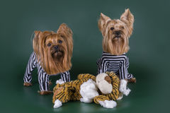 Dogs in prison for murder toys Stock Photography
