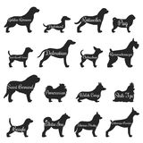Dogs Profile Silhouette Icon Set. Isolated purebred dogs profile silhouette icon set with golden retriever pug beagle jack Russell terrier and other breeds Royalty Free Stock Images