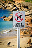 Dogs prohibited. Dogs playing on the beach with their owner at Clovelly Bay, Sydney, Australia, despite the prohibition sign Royalty Free Stock Photography