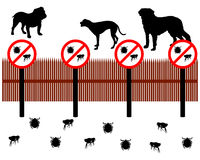Dogs protect against ticks and fleas Royalty Free Stock Photos