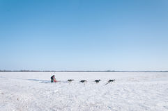Dogs pulling man on sledge Stock Photos