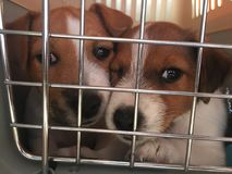 Dogs puppies in a cage. Puppies in cage Royalty Free Stock Images