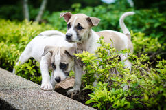 Dogs. Puppy white and brown color Royalty Free Stock Image