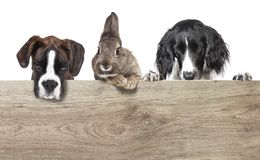 Dogs and rabbits copy space royalty free stock photography
