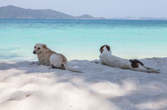 Dogs relaxing on beach Royalty Free Stock Image