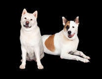 Dogs Relaxing Over Black Background Stock Image