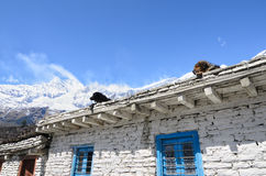 Dogs resting on the white stone house roof high in mountains Royalty Free Stock Images
