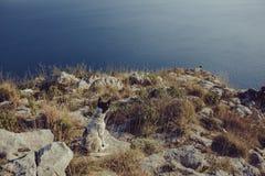 Dogs Roch Sea Grass stock photo