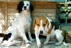 dogs roligt Royaltyfria Bilder