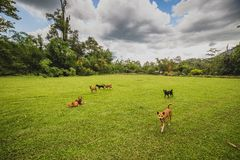 Dogs romp in the yard Royalty Free Stock Image
