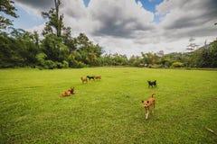 Dogs romp in the yard. A Dogs romp in the yard Royalty Free Stock Image
